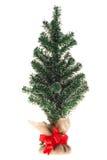 Undecorated Weihnachtsbaum Stockfoto