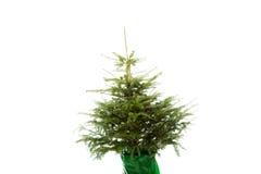 Undecorated Weihnachtsbaum Lizenzfreie Stockfotografie