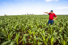 Undefined farmer Stock Photography