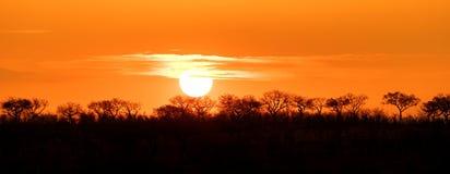 Under African skies Stock Image