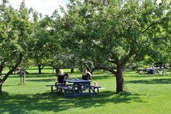 Under the apple trees Royalty Free Stock Photos