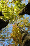 Under the autumn trees. Picture of three trees taken in the park on a wonderful sunny day. Imagine yourself lying on the grass, watching the blue sky through the Stock Photography