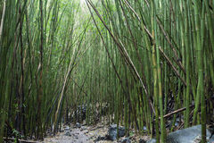Under a bamboo canopy Stock Photo