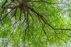 Under big green tree Royalty Free Stock Image