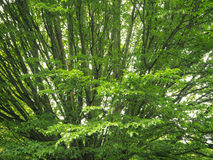 Under big green tree. Nature forest wood sunlight background. Royalty Free Stock Images