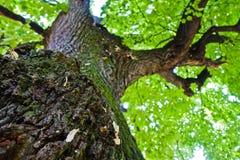 Under big old oak tree at summer in Kosutnjak forest, Belgrade Stock Photography