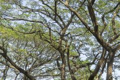 Under the big tree and with branch magnify.  Royalty Free Stock Images