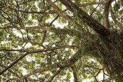 Under big tree. Royalty Free Stock Photo