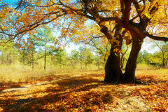 Under the big tree Royalty Free Stock Photography
