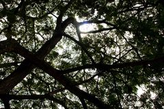 Under big tree view Royalty Free Stock Photos
