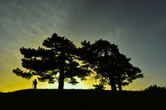 Under big trees and silhouette of man Stock Photo
