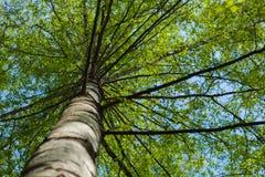 Under the birch Stock Photos