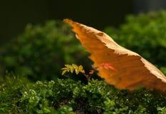 Under bladskyddet Royaltyfria Foton