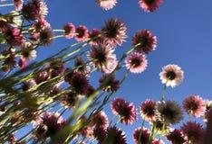 Under blommor arkivfoton