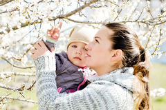 Under the blossom tree Stock Photography