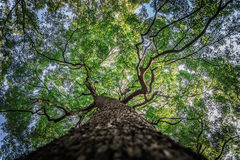 Under branch of big green tree in HDR style Royalty Free Stock Image