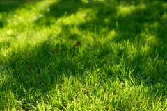 Under the bright sun. Abstract natural backgrounds. Fresh green spring grass on the lawn with the selective focus blurred bokeh Stock Images