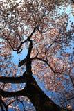 Under the Cherry Tree stock photography