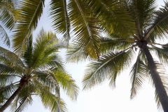 Under the coconut palm tree with ray of light and beautiful summ Royalty Free Stock Photo