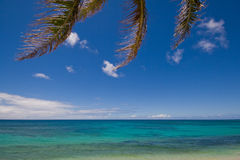 Under the coconut tree. View of horizon on tropical beach under coconut leaves on sunny day with deep blue sky Royalty Free Stock Photos