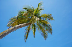 Under a coconut tree with blue sky in background Stock Photography