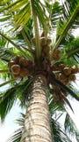 Under coconut tree Royalty Free Stock Photo