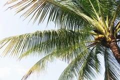 Under coconut tree Royalty Free Stock Photos