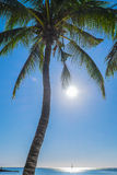 Under the coconut tree. Typical summer day at the Pereybere beach in Mauritius Stock Photo