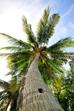 Under the coconut tree Stock Images