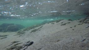 Under a cold river and waterfall in late autumn in the arctic circle, moving around the rocky bottom. Under a cold river and waterfall in late autumn in the stock video footage