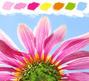 Under a coneflower color palette Stock Photo
