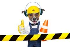 Under Construction Dog Stock Photo
