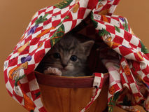 Under Cover. A small grey kitten playing hide and seek in a covered basket Royalty Free Stock Photography