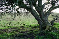 Under the crooked tree Royalty Free Stock Images