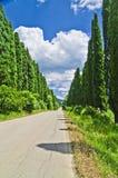 Under den blåa himlen med vita moln i solljuset den mest berömda träd-fodrade avenyn i världen royaltyfria bilder