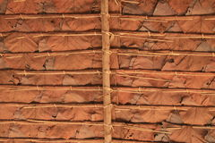 Under dry leaf roof Stock Image