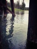 Under en bro på den Henry's gaffelfloden Idaho med träd royaltyfri bild