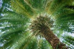 Under en palmträd Arkivfoto