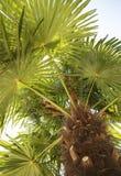 Under en palmträd se upp Royaltyfri Bild