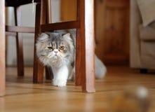 Under en stol Royaltyfria Foton