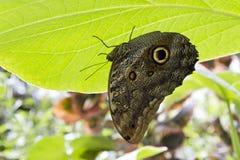 Under ett grönt bladparaply Royaltyfri Bild