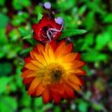 under för natur s Royaltyfria Foton