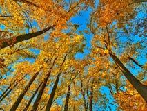 Under the Fall Canopy Stock Photos