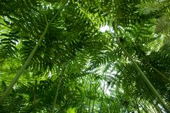 Under fern canopy closeup royalty free stock photography