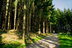 Under the fir trees. A shady forest path under conifers in the summertime in the Black Forest Stock Photography