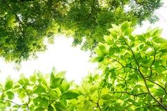 Under grönsallatträdet Arkivbilder