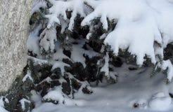 Under gran-träd Arkivfoto