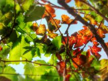 Under the grape vine shade Royalty Free Stock Photo