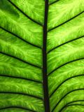 Under the green leaf with light on water drops background royalty free stock photography
