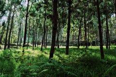 Under Greeny Trees Stock Photos
